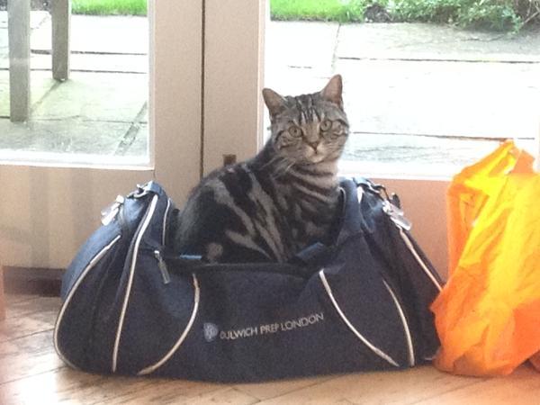 Cat & House Sitter