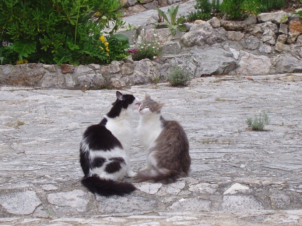 single female housitter for 2 months for 3 cats south of france