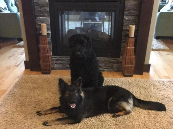 Housesitting assignment in Magrath, Alberta, Canada