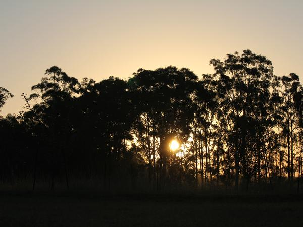 Housesitting assignment in Kempsey, New South Wales, Australia