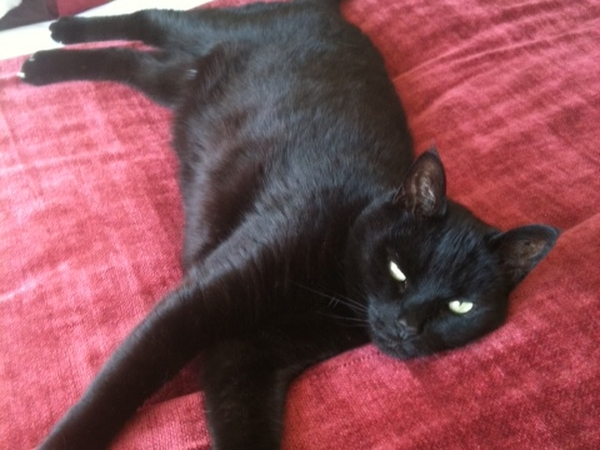 House/cat sitter needed: 20 April-20 May in West Wickham, Kent