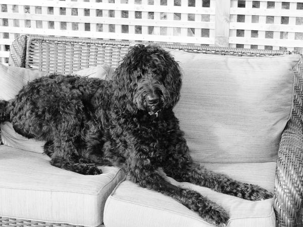 Pet sitter needed for my Labradoodle for Fri, April 29-  May 3. However due to early departure on the 29th, we may need to meet on the 28th.