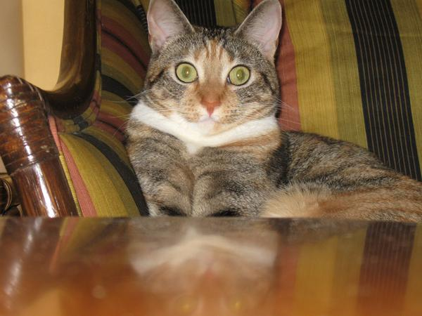 Pet Sitter for 2 Cats in Miracle Mile of Los Angeles