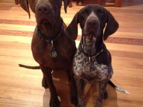 Celebrate New Year in the Melbourne sunshine with two affectionate dogs