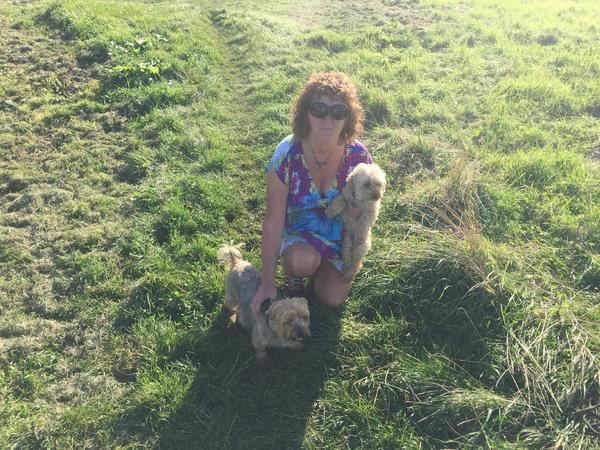 Dog/House Sitter Over Christmas required for one week for two small energetic dogs!!