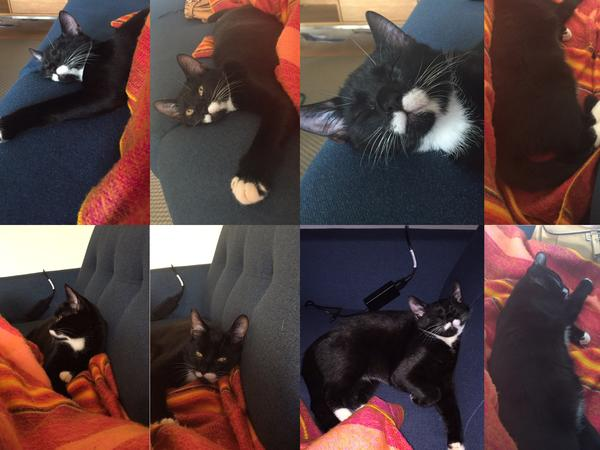 Cat sitter needed in Central Copenhagen