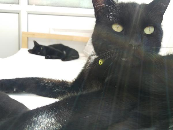 Sitter needed for two lovely cats in Birmingham