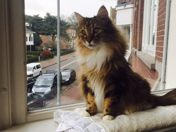 Pet Sitter needed for two cats in Haarlem for Weekend in May