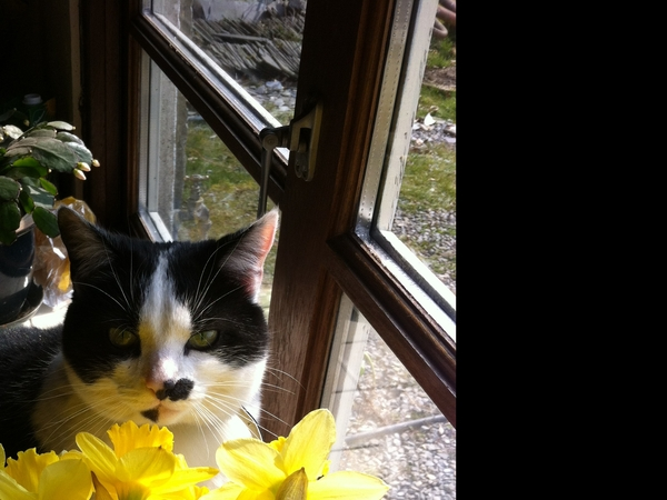 Housesitting assignment in Mullingar, Mullingar, Ireland