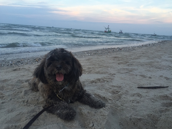Pet sitter needed for 2 lovely dogs and 2cats in beautiful Hua Hin, Thailand.