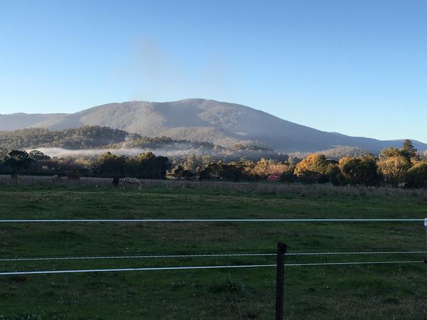 Housesitting assignment in Healesville, Victoria, Australia