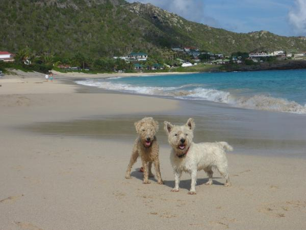Active dog/house sitters on the beautiful island of Antigua close to the beaches and marinas