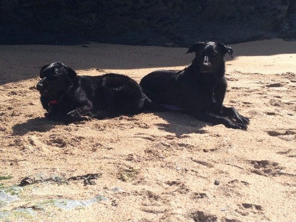 Lovely home and 2 friendly Labrador/collie cross dogs require looking after. Also holiday let apartment in grounds.