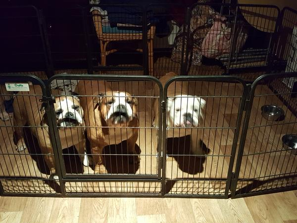 Pet sitter ( multi pet household) required for holiday cover