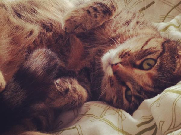 Pet sitter needed for 5 year old house cat in Balham SW London