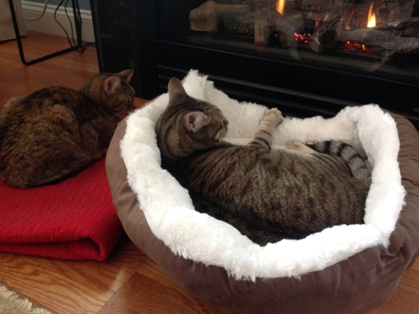 Pet sitter(s) for two great cats who live in a condo with a water view