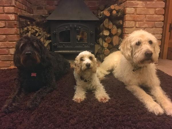 3 Dogs & House Sit in a Converted Barn in the Essex Countryside