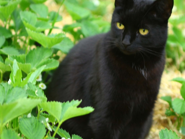 Cat sitter hoped for for long weekend 22 - 31 March, Lincolnshire Wolds.