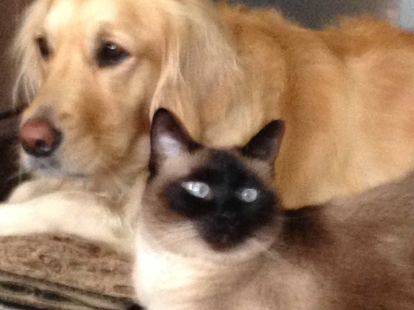 Pet sitter needed for about two weeks for our Golden Retriever and cat in Fort Worth, Texas