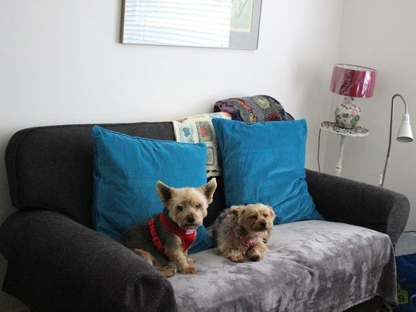 Caring Sitter for 2 small dogs needed in Dublin City Centre