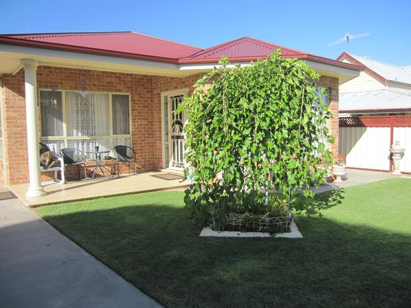"Pet sitter needed for ""Bundy"" kelpie cross dog in Rutherglen Vic. Australia"