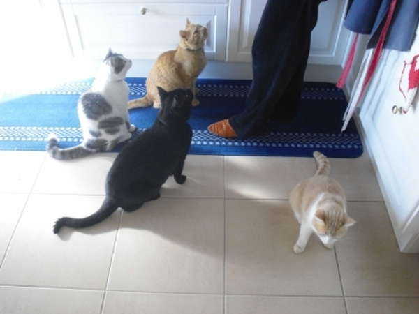 Cat/house sitter for mid February maybe 2-3weeks nothing is concrete as it depends who is looking after cats/house.
