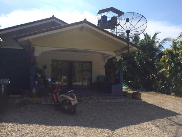 Housesitter to look after two cats  and a 13 year old dog in Koh Lanta, Thailand