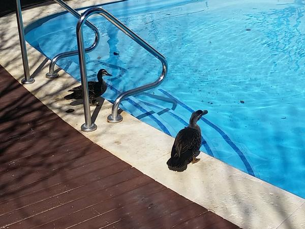 Housesitting assignment in Joondalup, WA, Australia