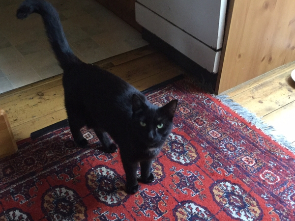 house sitter required, 3 lovely cats in a beautiful small town on the edge of Dartmoor  and not far from the sea.