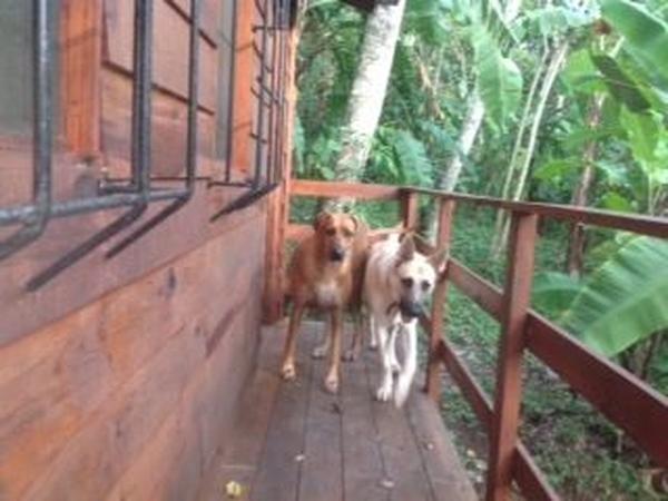 Nicaragua Eco-Lodge needs dog and cat sitter