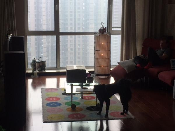 Housesitting assignment in Beijing, China