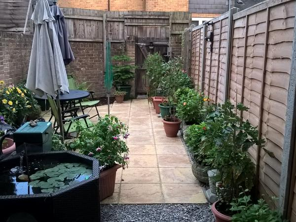 HOUSE/PET SITTER FOR HAMPSHIRE HOME