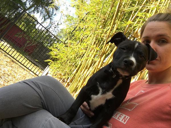 Puppy Friendly House Sitter