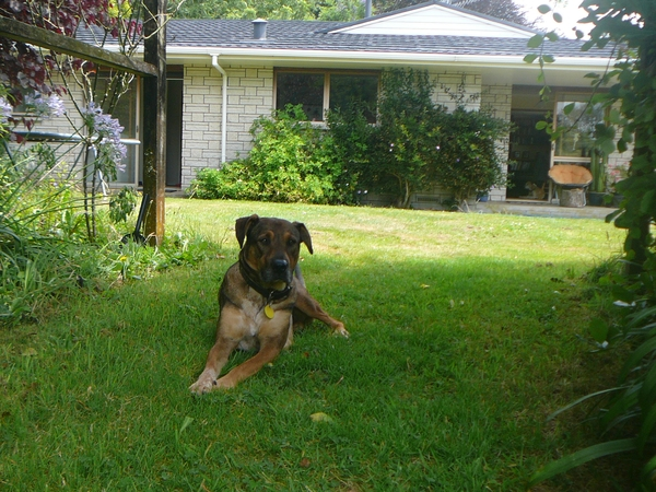 Housesitting assignment in Tauranga, New Zealand