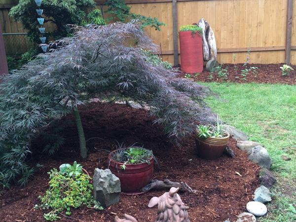 Housesitting assignment in Vancouver, Washington, United States