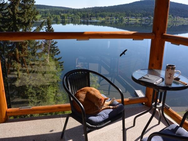 Housesitting assignment in 100 Mile House, British Columbia, Canada