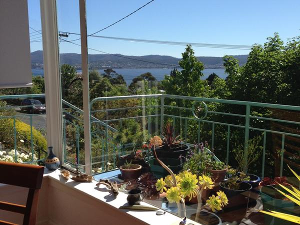 House with a view and sweet old Jack Russell /Fox terrier Sandy Bay Hobart  for 10 days