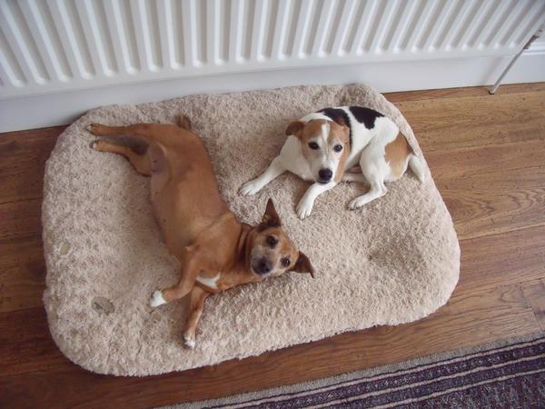 To look after for two lovely small Jack Russells & our house