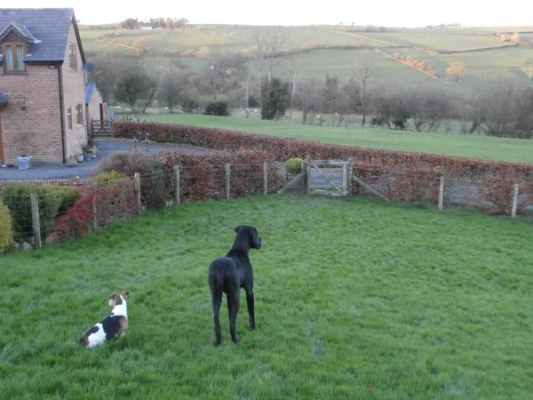 Pet sitter required in rural mid Wales - cosy log fire in snug