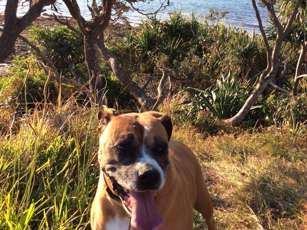 Housesitting assignment in Ballina, New South Wales, Australia