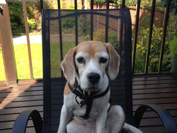 Pet sitter needed 28th Nov - 9th Dec to look after our lovely Beagle