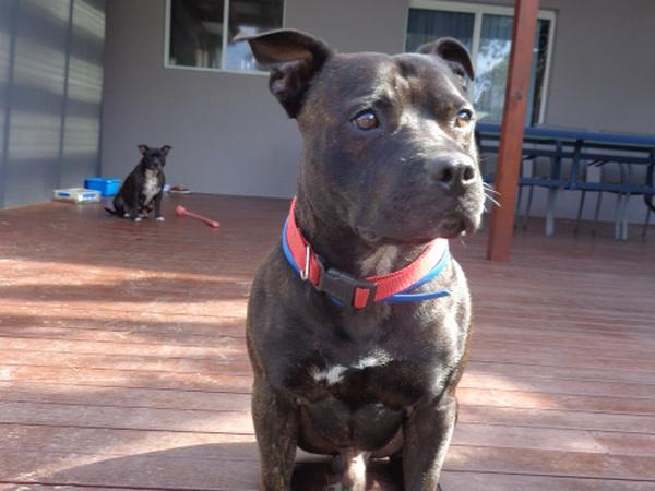 Housesitting assignment in Wheeler Heights, New South Wales, Australia