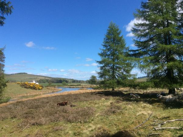 Housesitting assignment in Forfar, United Kingdom