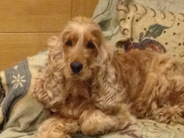 Tilly is looking for a good friend and playmate