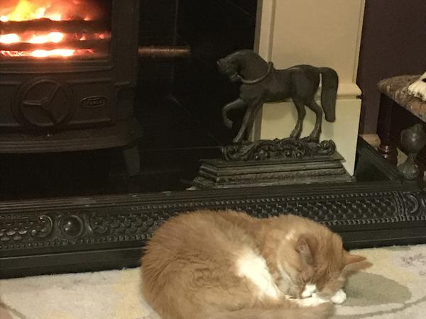 Housesitting assignment in Belfast, United Kingdom