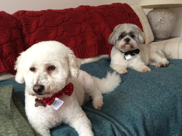House sitter to look after cat and two dogs