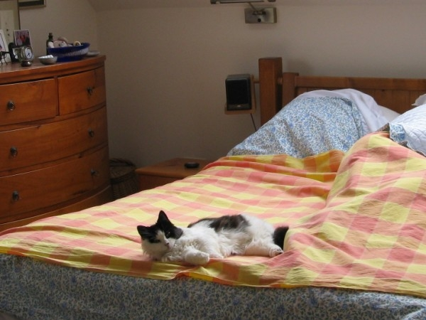 Home and cat sitter needed  for 12 weeks. Excellent location on edge of New Forest.