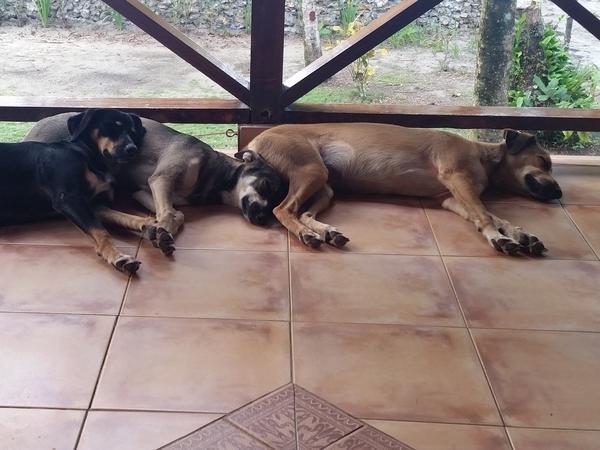 Housesitting assignment in Bocas del Toro, Panama