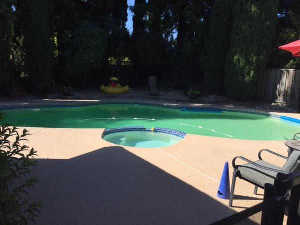 Housesitting assignment in Walnut Creek, CA, United States