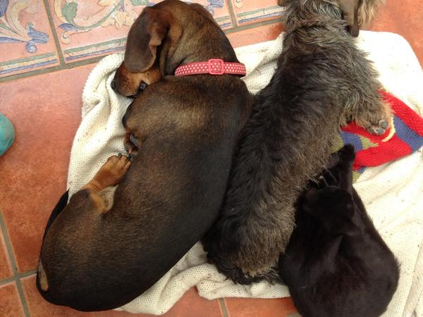 Pet Sitters (ideally couple) for three small dogs, three lovely cats and 7 chickens from 22nd July to 10th August